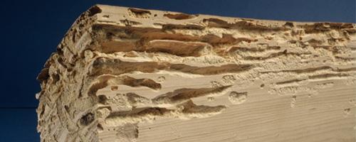 Traitement des insectes et vers de bois hydrotec for Traitement vers du sol